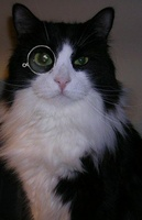 cyni-kitty-monocle-thmb.jpg